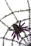 black spiderweb Arkivbilder