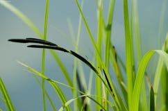 Black spike Stock Photo