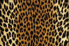 Black spots of a leopard royalty free stock photos