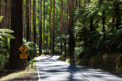 The Black Spur Stock Images