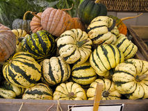 Black Squash Stock Images