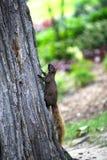 Black Squirrel Stock Photos