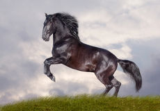 Black stallion. On stormy background Stock Images