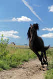 Black stallion. Black horse run in sky Stock Photography