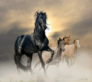 Free Black Stallion Royalty Free Stock Photos - 41373278