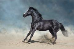 Black stallion in desert