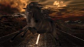Black Stallion Royalty Free Stock Photo