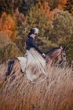 The black stallion Stock Photos