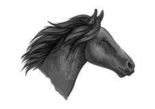 Black stallion horse sketch with racehorse head Stock Photos
