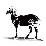 Black stallion silhouette Royalty Free Stock Photography