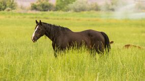 Black Stallion Standing on Green Grass during Daytime stock photos
