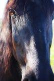 Black Stallion1 Royalty Free Stock Images
