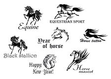 Black stallions and mustangs Royalty Free Stock Images