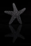 Black starfish Stock Photo