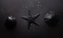 Black starfish Stock Photos