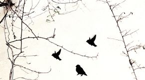 Black stencil painted birds street art on white wall with real natural tree branches with no leaves