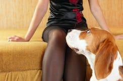 Black stockings Stock Image