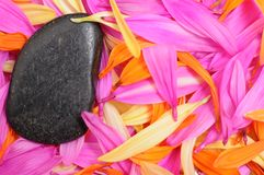 Black stone and folorful petal Stock Images