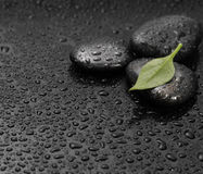Black stone with leaf Stock Images