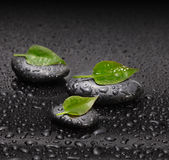 Black stone with leaf Royalty Free Stock Photo