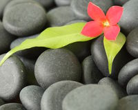 Black stones. With a flower on it Royalty Free Stock Photography