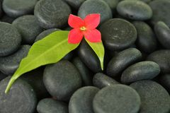 Black stones. With a flower on it Stock Photo