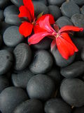 Black stones. With a flower on it Stock Images