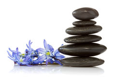 Black stones and  blue  flowers Stock Photography