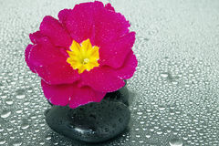 Black stones and flower. With some water drops Stock Images