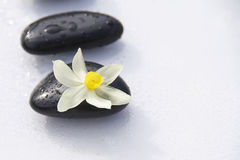 Black stones and flower Royalty Free Stock Photos