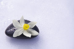 Black stones and flower Royalty Free Stock Photo