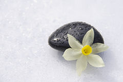 Black stones and flower Royalty Free Stock Photography