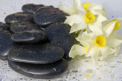 Black stones and flower. With some water drops Stock Photos
