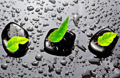 Black stones with green leafs. Black SPA stones with water drops and leafs Stock Photos