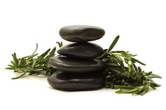 Black stones with green leaves Stock Photography