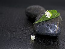 Black stones with leaf, flower and water drops on Stock Images