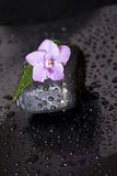 Black stones with leaf, flower and water drops on Royalty Free Stock Photos