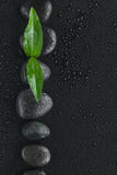 Black stones and leaf  lie on a wet black background Stock Photography