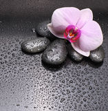 Black stones and orchid Stock Photo
