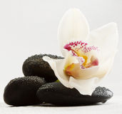 Black stones and orchid Stock Image