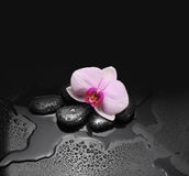 Black stones and orchid with drops Stock Photo