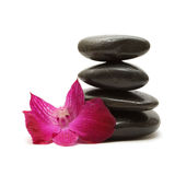 Black stones and orchid - feng shui concept. Black stones and orchid isolated on white background royalty free stock photos