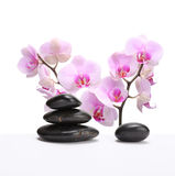 Black stones and pink orchid Royalty Free Stock Image