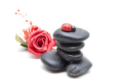 Black stones with rose and ladybug Royalty Free Stock Photo