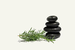 Black stones with rosemary branch Royalty Free Stock Photography
