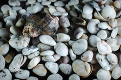 Black stones and sea shell background. On a black background, pebbles and sea shells Studio light Stock Image