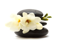 Black stones and white flower Stock Image