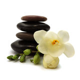 Black stones and white flower. Wet black stones and delicate white flower Royalty Free Stock Photos