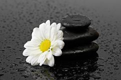 Black stones and white flower with water drops Royalty Free Stock Photo