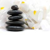 Black stones and white flowers Stock Image